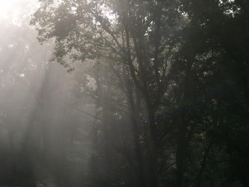 Bosque en St Martin (Cantal)