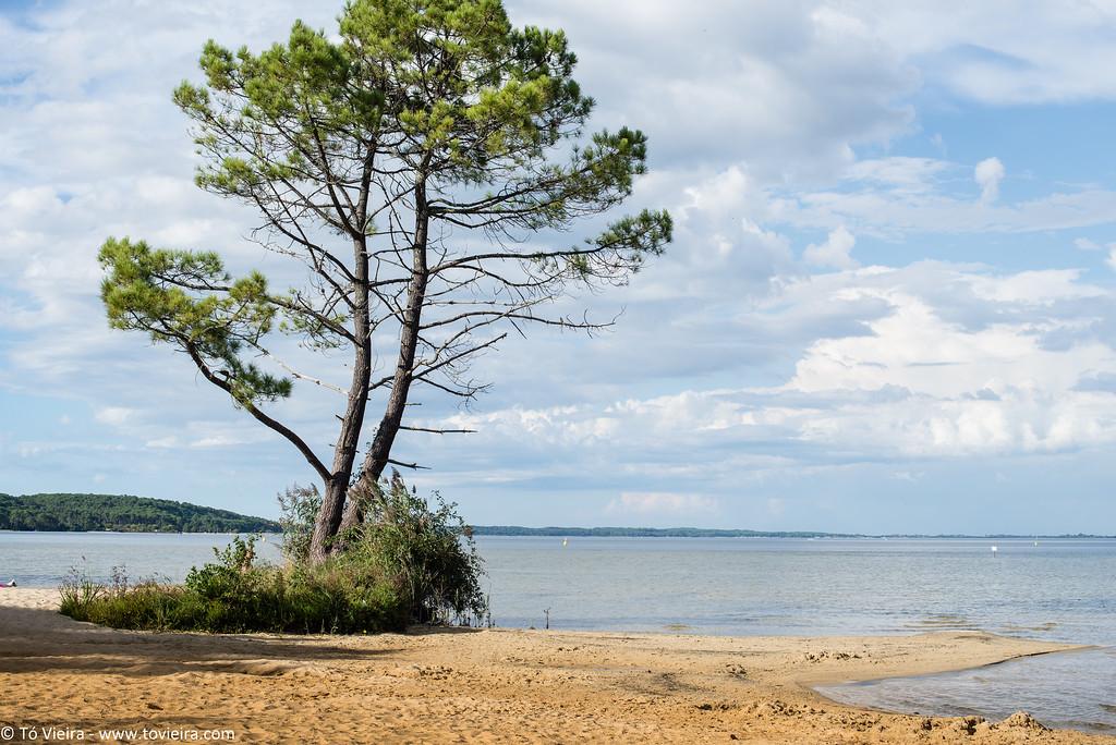 Biscarrosse, le bord du lac