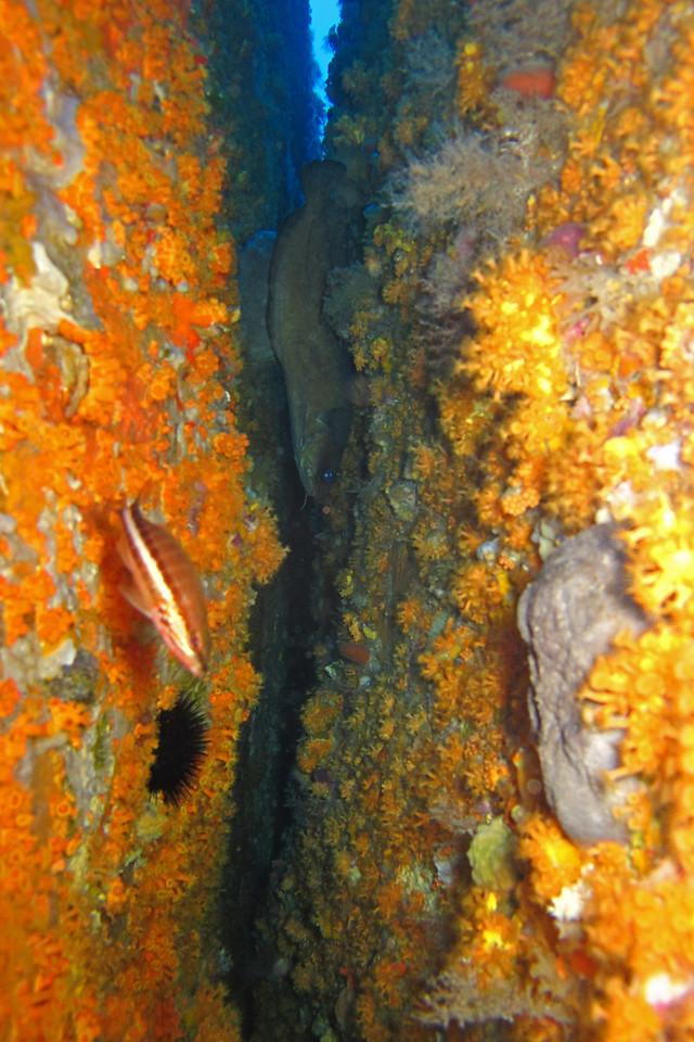 Diving near the Île Lavezzi