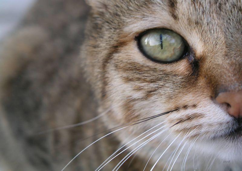 ka in a stare