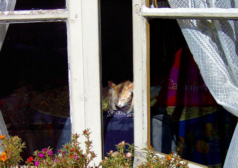 Sunbathing Kitten #2