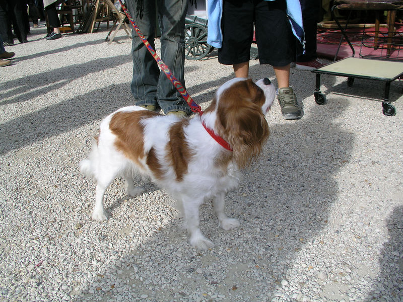 "Lilou the Cavalier <br /> ""Chatou"" The Ham and Antique Faire.  Paris, France"