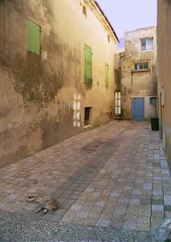 Alley Cat in Provence