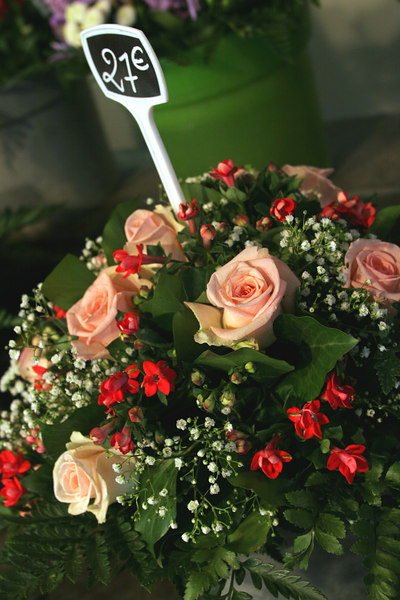 Pink Roses (2)