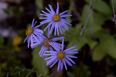 Wild flowers were abundant along the hiking paths through the area.