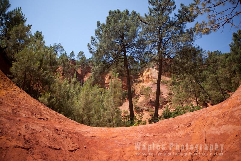 Ochre and Pine