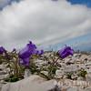 Flora and Sky