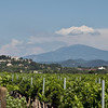 Vineyard and Mont Ventoux in the distance