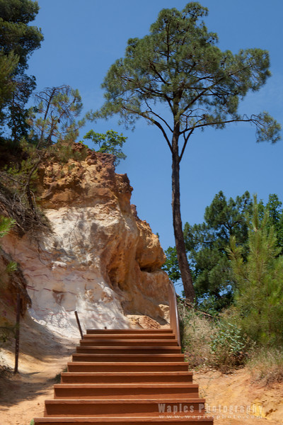 Steps and Pine