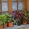 Plants on Window Sill
