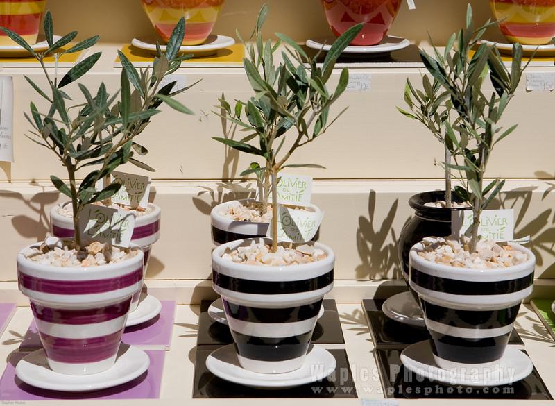 Arbre du olivier (Potted Olive Trees)