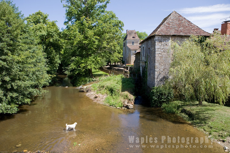 Dog Crossing River Vienne in St. John