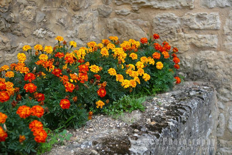 Plot of Marigolds