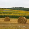 Hay Bales - Sunflowers