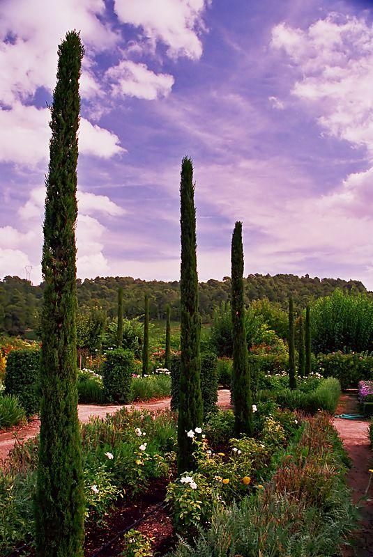 Vineyard in the Luberon