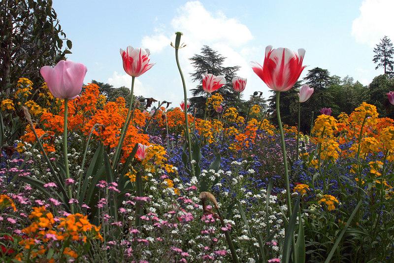 Tulip Jardin