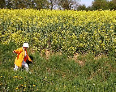 The rapeseed fields were in full bloom.