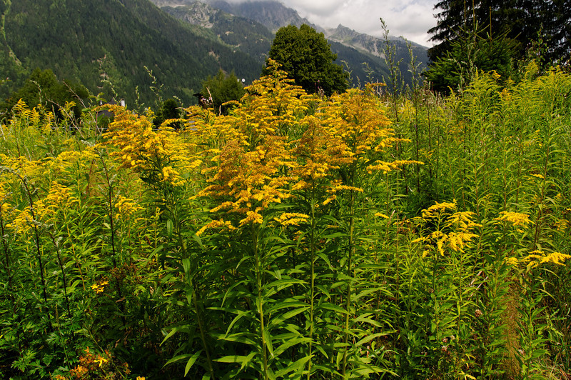 Mont Blanc - France - 3986