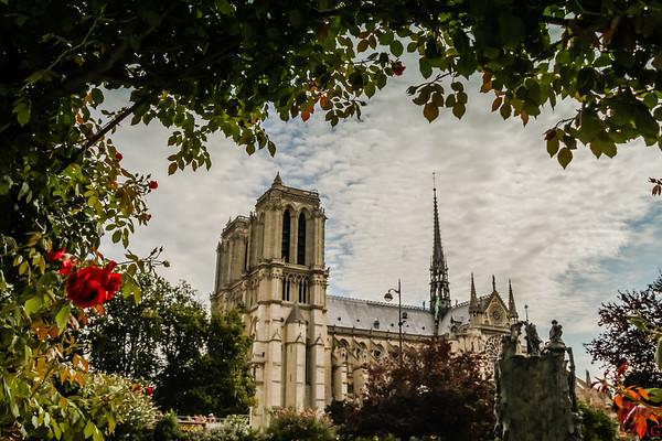 Best spot to photograph Notre Dame from: Square René Viviani, Paris 2