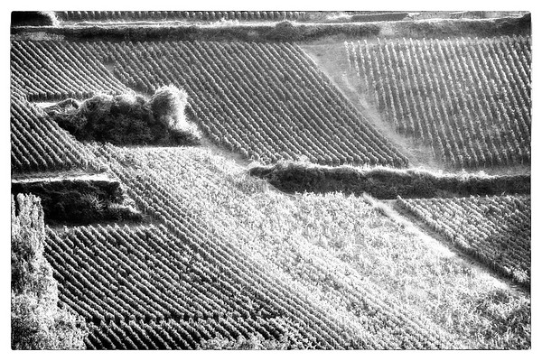 France 2014- Vineyard 0742 Orton BW