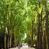 Château de Chenonceau - an arcade of plane trees