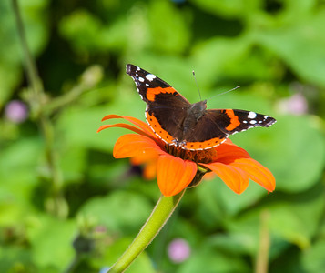 Butterfly at Monet's garden