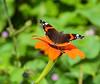 Butterfly at Monet's garden