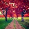 <b>Autumn's Back (French Riviera) - HDR</b> <i>Nikon D300 + Sigma 10-20 mm F4-5 DC EX HSM</i>