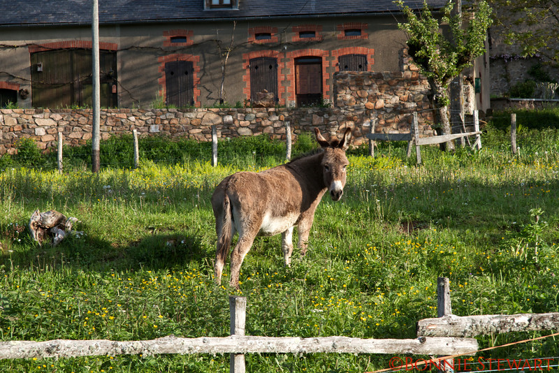 Donkey in the village of Chaumard