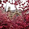 Notre Dame En Fleurs.<br /> Paris.