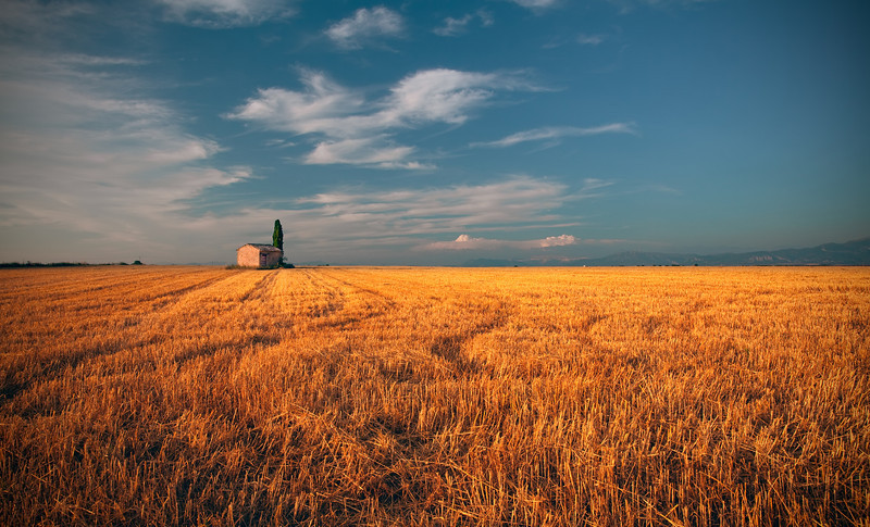 <b>Golden Field</b> <i>Canon EOS 5D Mark II + Canon EF 17-40mm f/4L USM</i>