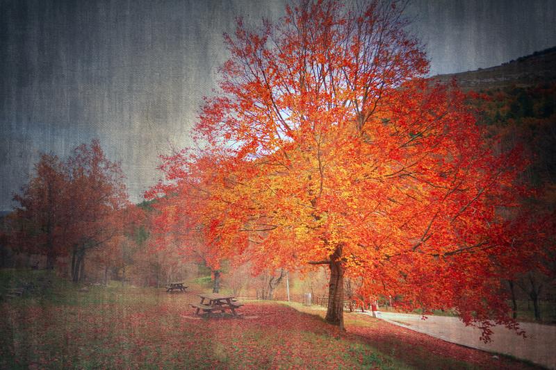 <b>The Last Leaves...#2</b> <i>Canon EOS 5D Mark II + Canon EF 17-40mm f/4L USM</i>