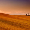<b>Golden Field #2</b> <i>Canon EOS 5D Mark II + Canon EF 17-40mm f/4L USM</i>