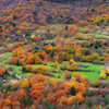 <b>Fall Foliage (French Riviera)</b> <i>Canon EOS 5D Mark II + Canon EF 24-70mm f/2.8L USM</i>