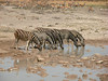 Zebras at waterhole in prior panorama, taken about a minute before the next image.