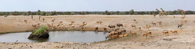 Typically busy waterhole in Etosha.  (Best Viewed at X3)