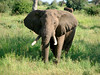 Tarangire has a large population of elephants.