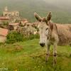 Auvergne 2012