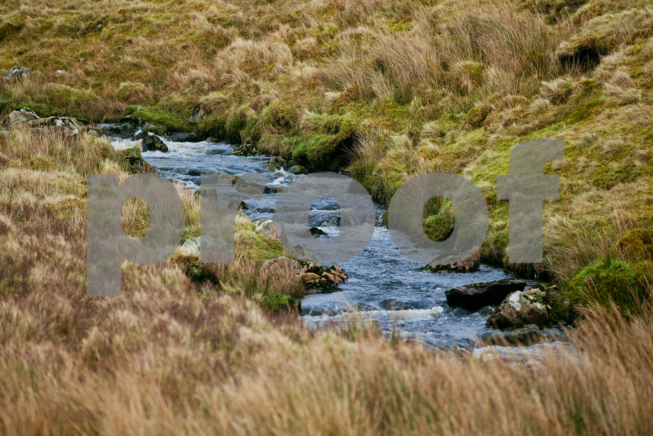 A small, tranquil stream.
