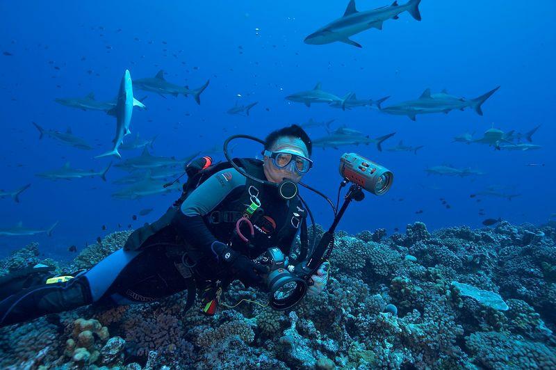 Jerry Watanabe with grey reef sharks (Carcharhinus amblyrhynchos).  Notice the one shark that has flipped vertical, presumably to dislodge a shark sucker. (Fakarava - South Pass)