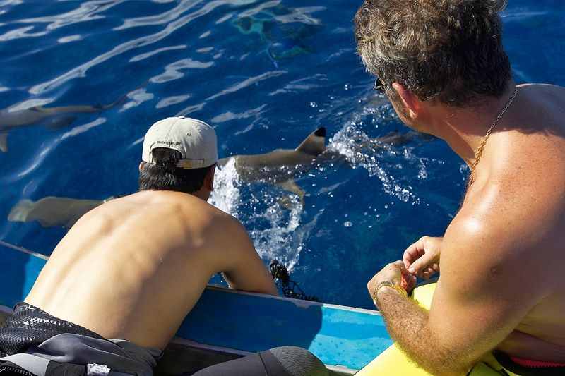 Eric Cheng and Douglas Seifert photograph Blacktip reef sharks (Carcharhinus melanopterus) at the surface (Moorea - Tiki Place)