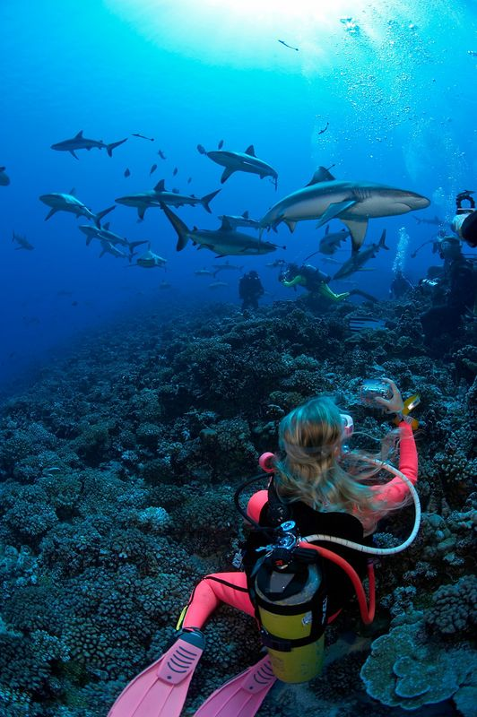 A colorful Kristina Gossman photographs grey reef sharks (Carcharhinus amblyrhynchos) (Fakarava - South Pass)