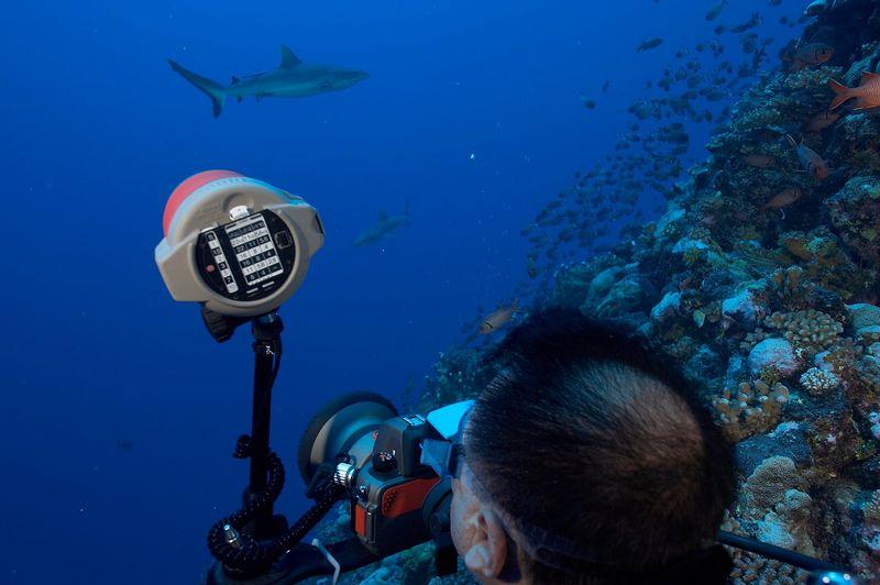 Jerry Watanabe photographs grey reef sharks with his Nikonos RS camera (Tikehau - Shark Hole)