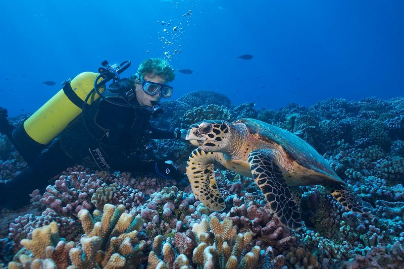 Scottie Franklin with a friendly female hawksbill turtle (Eretmochelys imbricata) (Rangiroa - Tiputa Pass Corner)