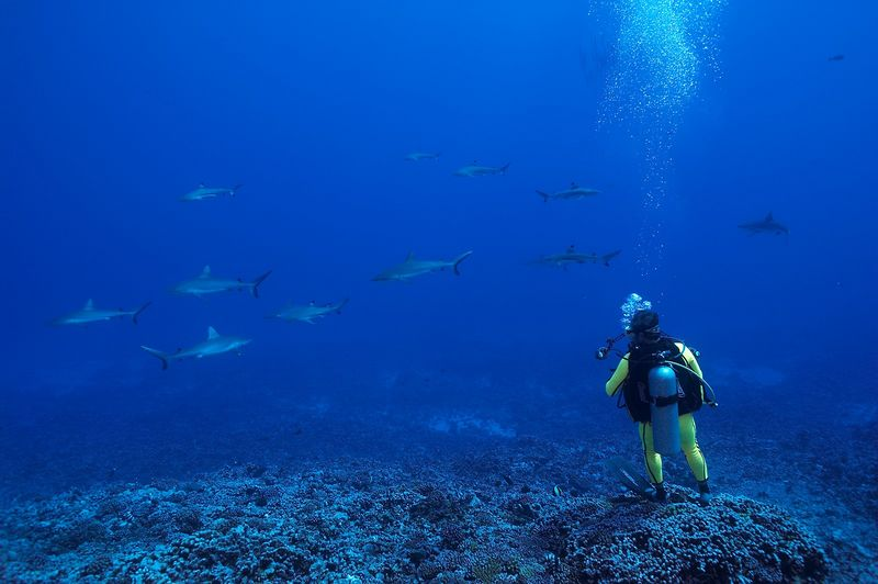 Douglas Seifert with grey reef sharks (Carcharhinus amblyrhynchos) (Moorea - Misc Diving)