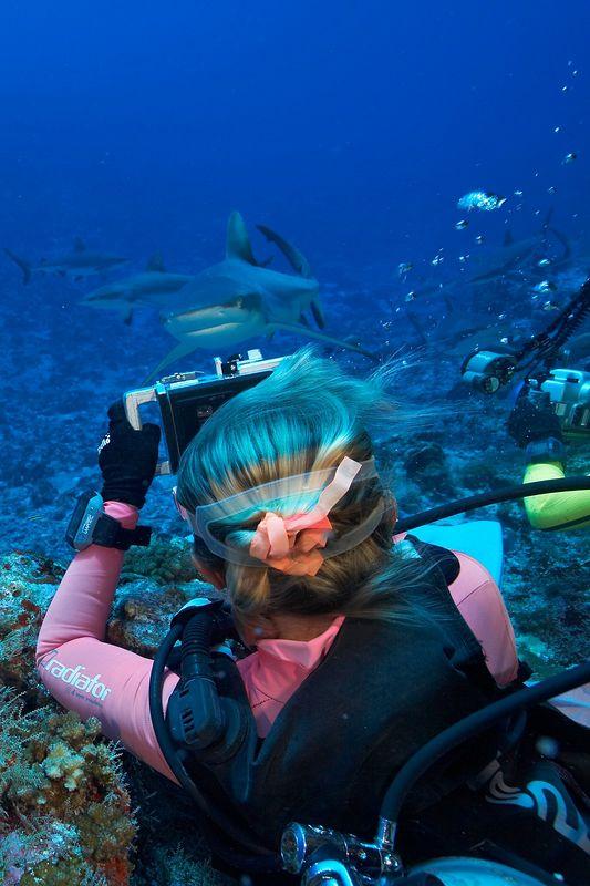 Valerie Taylor photographs grey reef sharks (Carcharhinus amblyrhynchos) (Apataki - Tehera/Shark Plaza)
