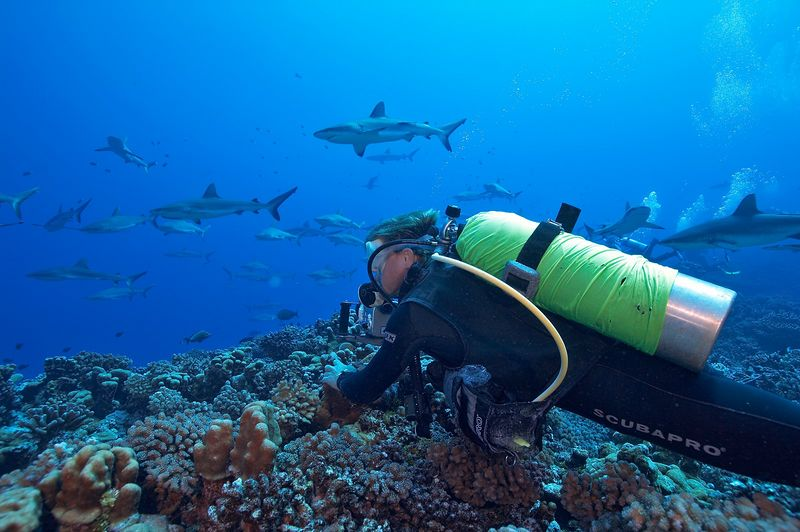 Seb Bertaut and grey reef sharks (Carcharhinus amblyrhynchos) (Fakarava - South Pass)