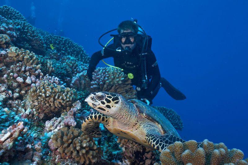 Rocky Spane looks on as a friendly female hawksbill turtle (Eretmochelys imbricata) (Rangiroa - Tiputa Pass Corner)
