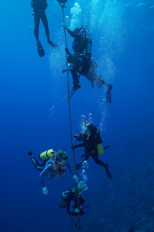 Divers during their safety stop (Tikehau - Shark Hole)