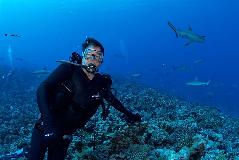 Mike McDowell with grey reef sharks (Carcharhinus amblyrhynchos) (Fakarava - South Pass)